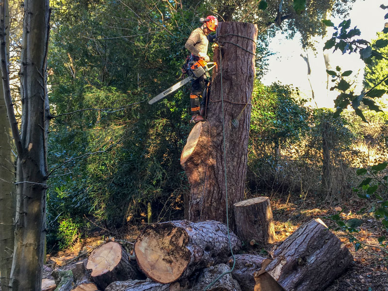 holbrook tree care